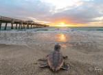 Zp_Juno Pier at Sunrise